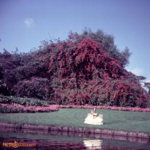 February 1978 Polynesian & MK Titus36