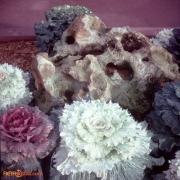 February 1978 Polynesian & MK Titus16