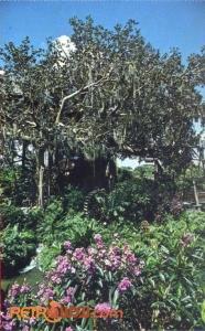 Swiss Family Treehouse Postcard