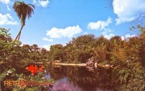 Discovery Island Postcard